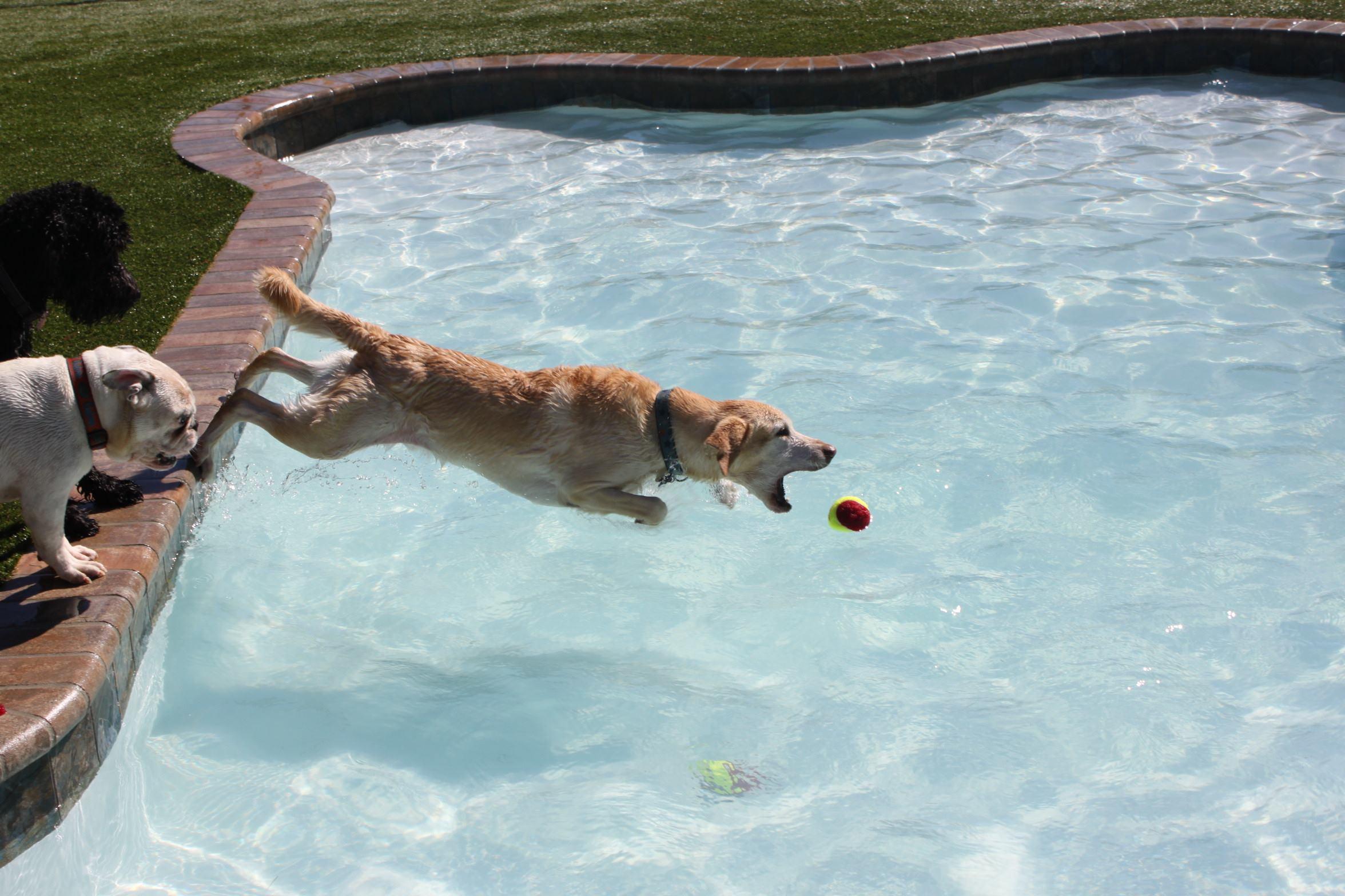 Give A Dog A Bone Shaped Pool Pool Amp Spa News Pools