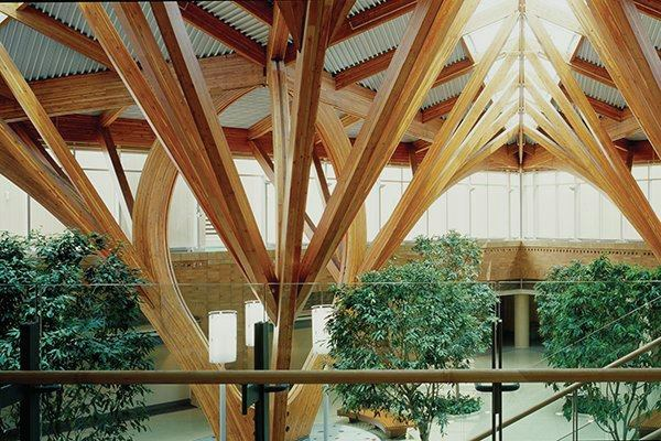 A Tree Filled Atrium To Inspire Patients Architect
