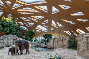 Kaeng Krachan Elephant Park Shell
