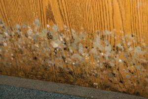 Mold can develop on almost any surface and requires three things to grow: mold spores, moisture, and a food source.