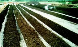 Right: In this typical windrow operation, the average windrow is between 4 and 8 feet  high and between 14 and 16 feet wide—large enough to generate  sufficient heat and maintain temperatures, yet small enough to allow oxygen  to passively flow to the windrow's core.Photos: Coker  Composting and Consulting