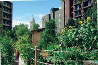 Three Fundamental Truths About Urban Farming