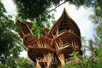 This Week in Tech: Building With Bamboo