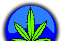 Pot Policies are a New Must for Contractors