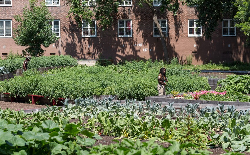 New York City Housing Authority Farms