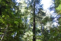 To Build a Business That Lasts, Think Like a Redwood