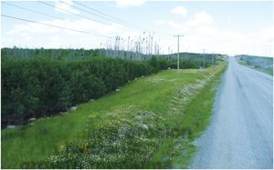 Although new topsoil was needed to reclaim this Québec roadside, it was not an option thanks to high transport costs. Instead, the hydraulic growth medium approach allowed topsoil to form through natural processes. Photos: Verdoyl Plant Research