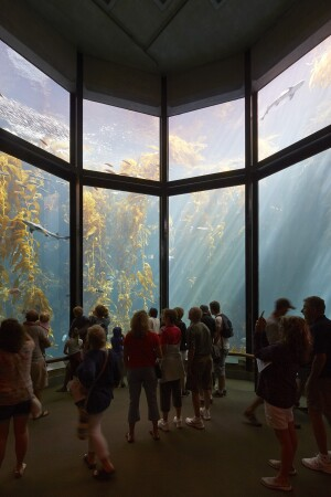 The 28-foot-tall kelp forest exhibit.