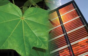 Taking a cue from the role chlorophyll plays in photosynthesis, Dyesol solar collectors use a dye in their PV cells to convert sunlight into electricity.
