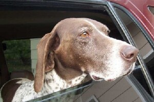 Six Things My Hunting Dog Has Taught Me About LBM