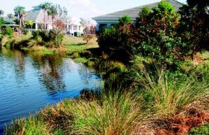 Landscape designer Pat McCarley removed sod from a stormwater pond and replaced it with native plants--such as cypress, leather ferns, and cordgrass--that are healthier for the environment.