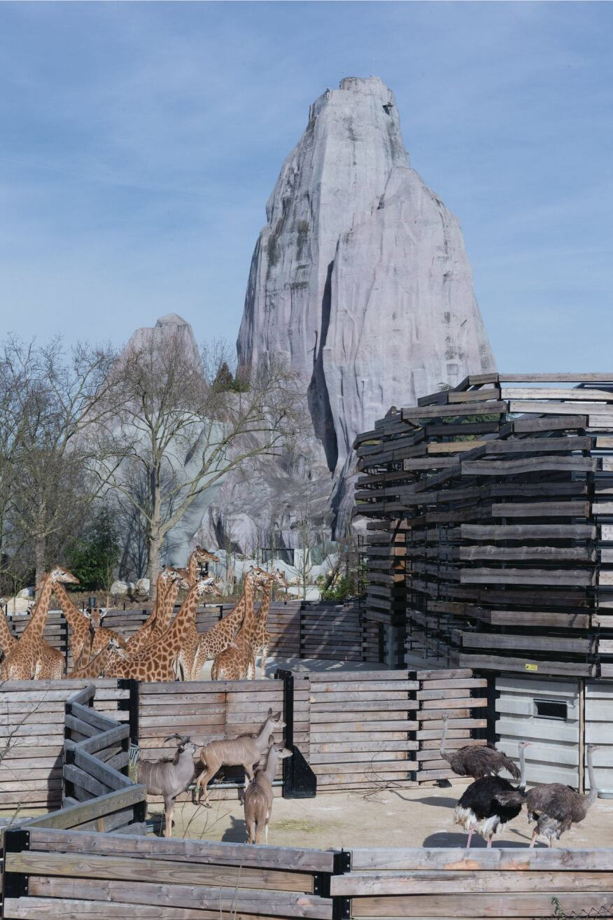 The large-scale animal enclosures, such as those for the zoo's 16 giraffes, feature a corrugated metal envelope covered in a loose latticework of wooden slats. Beyond, the museum's iconic Grand Rocher is one of the fake rocks that were part of the original 1934 design for the zoo.