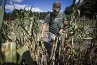 Current Mass. Drought Foreseen in Early 2015