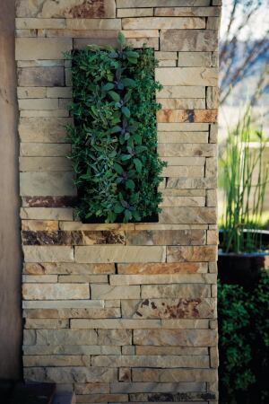 """The BrightGreen Living Wall Planter consists of a single polymer unit lined with a moisture mat. Three sizes are available: 20"""" by 20"""" by 2-1/2"""", 10"""" by 20"""" by 4"""", and 8"""" by 18"""" by 4"""". Each planting cell can be populated with plants from a local nursery. Units can be hung separately or in groups on any vertical surface using a supplied mounting bracket. ¢ brightgreenusa.com"""