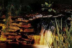 Landscape Lighting - Continued