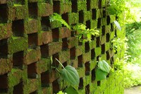 Architecture's Future: Moss, Not Mirrors on the Walls