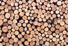 DNA Testing to Trace Lumber's Origins