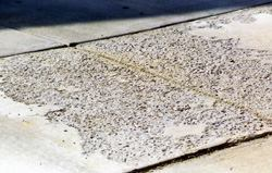 This is a section of sidewalk in front of a driveway. The scaling shown could have many different causes. Petrographic analysis is the only way to know what really happened, but one possibility is that the contractor placed concrete with too much water causing the surface to become porous (most water goes to the surface).