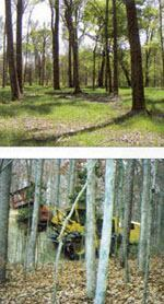 Top: An innovative approach to flood management enabled the city of Longview, Texas, to save money and preserve the Grace Creek area's natural beauty. Photo: Mike Bird. Bottom: Contractors used a 425-hp Tigercat 760M carrier, with a Bull Hog mulching attachment, to clear trees and brush.