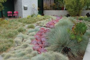 This Santa Barbara, Calif., yard, designed by landscape architect Jack Miles Kiesel and featured in the book  Reimagining the California Lawn (Cachuma Press), showcases how native plants and turf, even in drier climates, need not be dull. The landscaping shown here includes blue moor grass (Sesleria caerulea); blue fescue (Festuca glauca); Echeveria After Glow; and blue oat grass (Helictotrichon sempervirens).