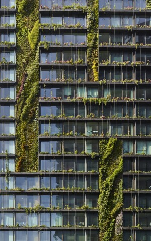 Botanist Patrick Blanc, known as the father of vertical gardens, used 250 plants and flowers across 24 plant-covered panels. Image courtesy of Frasers Property Australia and Sekisui House Australia
