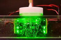 Metal-Transforming Microbes