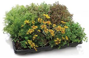 GreenGrid roof systemGreenGridwww.greengridroofs.com  Modular green roofing system offered in three capacities: Ultra-Extensive (2½ inches of soil), Extensive (4 inches), and Intensive (8 inches) - Intensive accommodates larger plants and shrubs