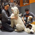 Pooch attention in multifamily dog spas, a growing trend.