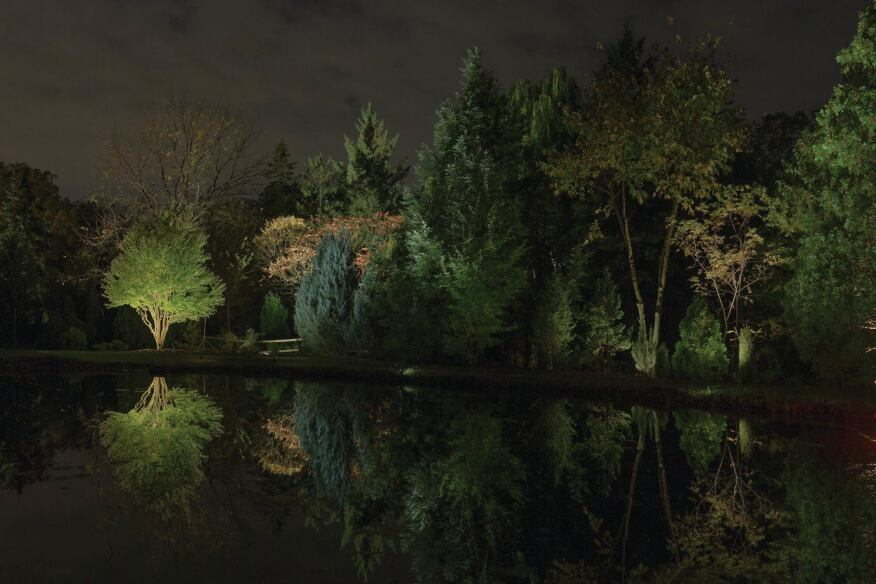 The Sumac (Rhus), Spruce (Picea), and Willow (Salix) trees that form a triad grouping to the left of the site were illuminated using metal halide floodlights with spread lenses. Light levels were balanced with the Black Walnut from Group 1's scene, which is also visible from this vantage point.