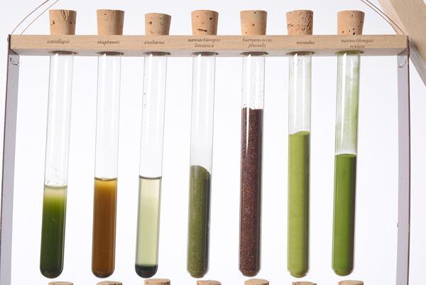 German studio Blond & Bieber uses powdered microalgae to print color-shifting designs on textiles.