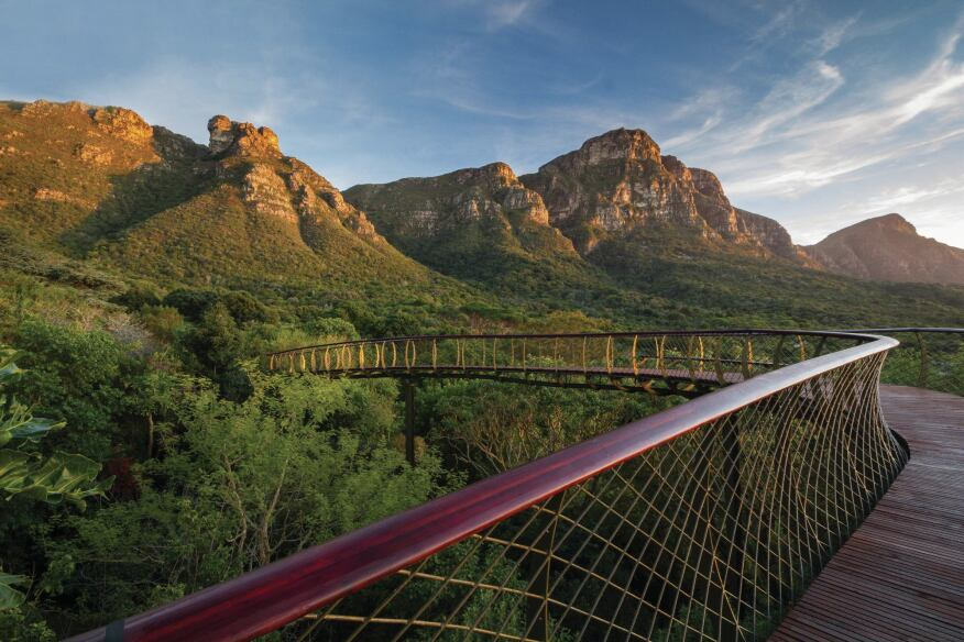 The Centenary Tree Canopy Walkway takes visitors up, through, and above the Kirstenbosch arboretium against the backdrop of Table Mountain's eastern face.