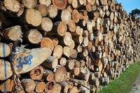 "PCA Calls Timber Innovation Act ""Anti-Competitive"""