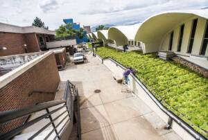 Sedum plants covering 2,650 square feet of roof over an ice arena at Colorado College will require little maintenance while helping to insulate the building and lower noise levels.