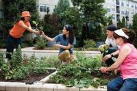 Planting Seeds: Gardens As Amenities