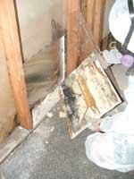 You can treat small mold incursions yourself. Wear protective clothing and a dust mask.