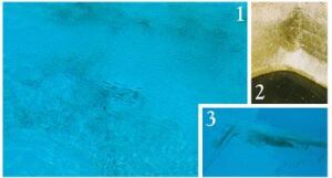 Black algae (photos 1 and 2) produce  distinctive ragged stains on any surfaces where they grow. By  contrast, black metal stains (photo 3) are often  smoother-edged.