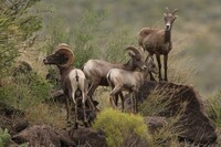 CEMEX Awarded for Wildlife Protection