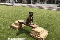 Gym For Dogs Balance Beam
