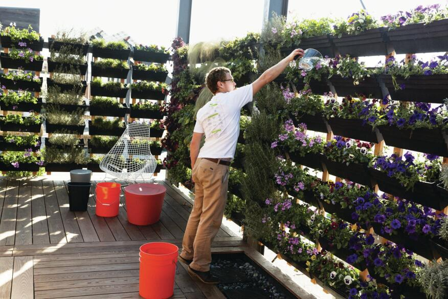 A student waters the vertical garden in UrbanEden, UNC Charlotte's house.