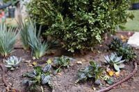 Product Review: Water-Efficient Landscaping