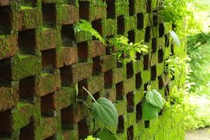 A Garden Wall during  Monsoon, a Fine Art Shot of a Rustic Brick Wall