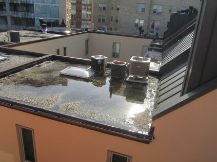 Inadequate slope and poor drainage allows water to pond on a flat roof. The result: biological growth and an increased risk of leaks.