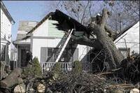 Breakline: When a Tree Falls