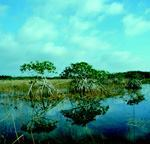 "The U.S. Supreme Court has ruled that the U.S. Army Corps of Engineers cannot consider a wetland ""adjacent"" to waters based on a series of hydrologic connections. Photo: Everglades National Park Photo"