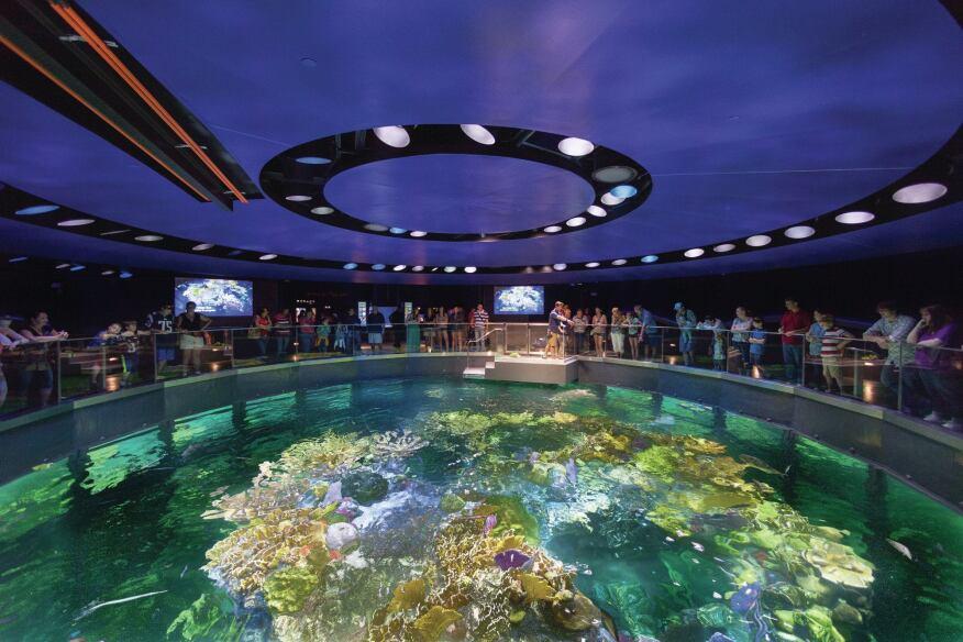 Deep Dive at Two Aquariums by Cambridge Seven Associates ...