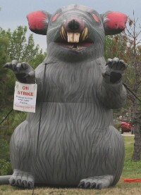 This giant rat was set up by a group of Teamsters striking a ProBuild facility in Yorkville, Ill.