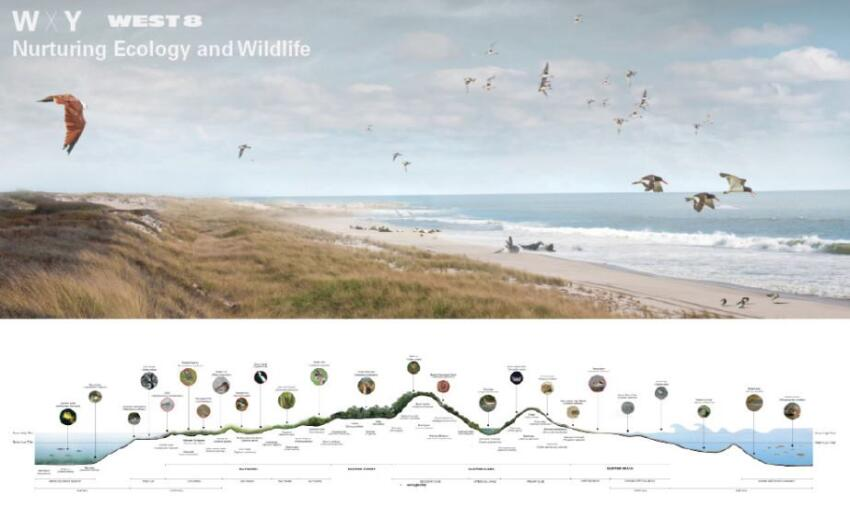 "WXY and West 8's ""Blue Dunes: The Future of Coastal Protection"""