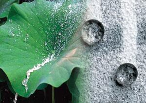 Sto Corp.'s Lotusan coating mimics the surface of a lotus leaf to repel water and dirt.