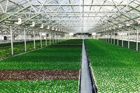 A Look at the World's Largest Rooftop Greenhouse