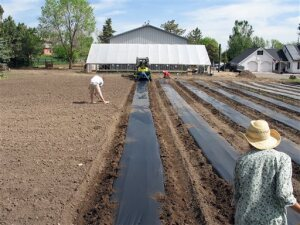 In this May 28, 2013 photo provided by Agriburbia LLB, workers prepare new growing beds at Table Mountain Farm near Golden, Colo. When mature, the flowers and edibles will be sold directly from the field for processing or to be eaten raw by people who live nearby. (Matthew Redmond for Agriburbia LLB via AP)